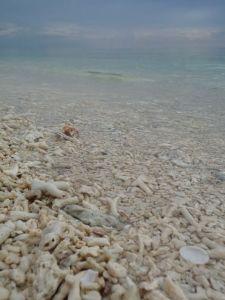 p coral sea