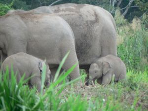 p-elephant-baby