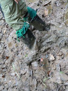 p-mud