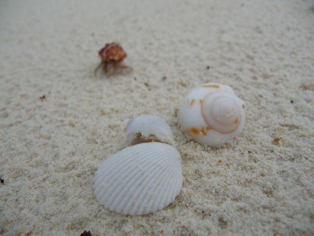 p shells