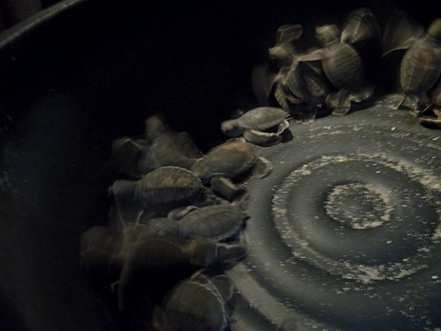 p turtle tub